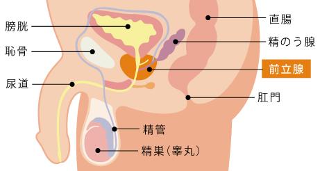精液 尿 検査 蛋白